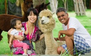 Alpaca Hill Pinoy Thaiyo
