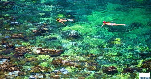DSC_8906-koh-tao-snorkeling-large