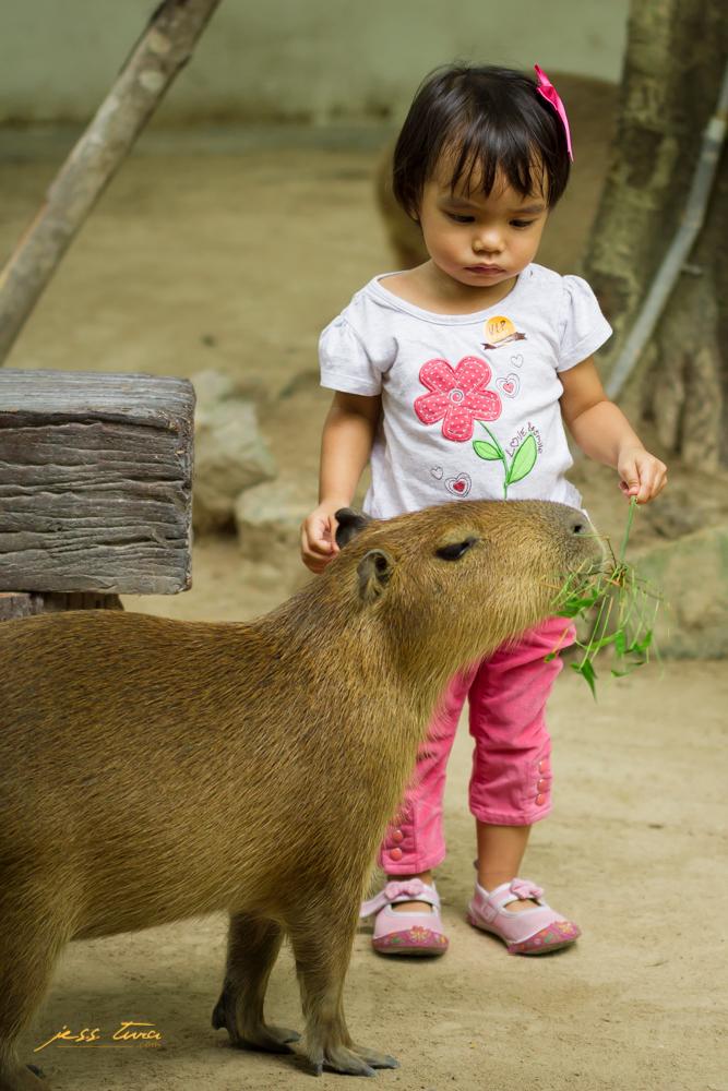 capybara alpaca hill pinoy thaiyo