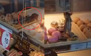 rat in a donut shelf